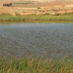 Laguna de Noviecas, ayuntamiento de Noviercas